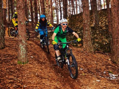 Bikes at Forest BTT