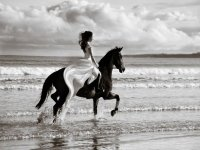 Celebrate weddings with our beautiful horses!
