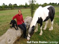 Come and meet everyone at Hall Farm Stables!