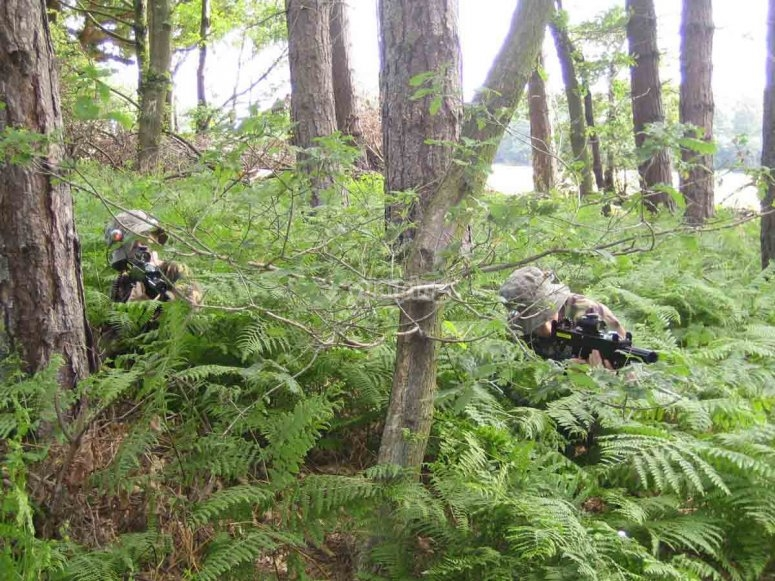 Action in the ferns