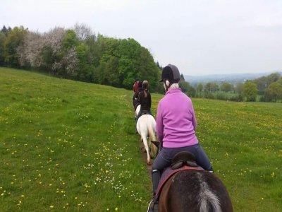 Alyn Bank Riding School