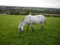 Beautiful horses in green spaces!