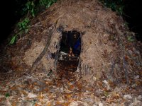 Shelter Building (Bushcraft)