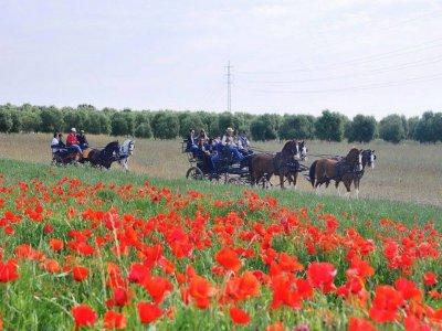 Horses in Spain