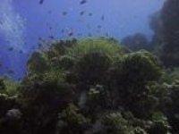 Beautiful underwater sights