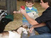 Feed he baby animals.