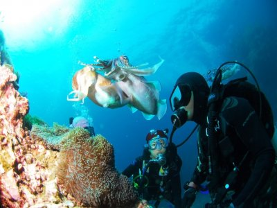 Quality Time Training ltd Diving