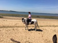 Hacking in the beach with Hill Farm Equestrian Centre