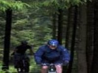 Forest riding