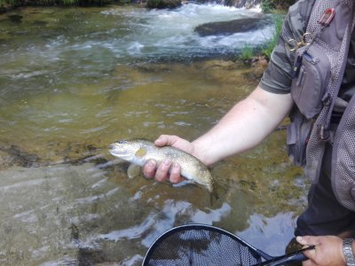 Madrid Fishing Guides
