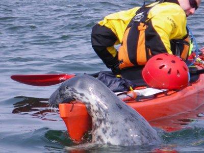 Rock & Sea Adventures Kayaking