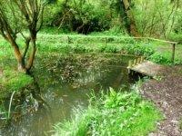 Jacksons Pond.