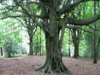 The Magic Tree.