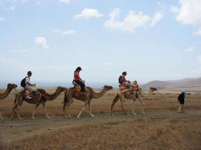 Lanzarote a Caballo Paseos en Camello