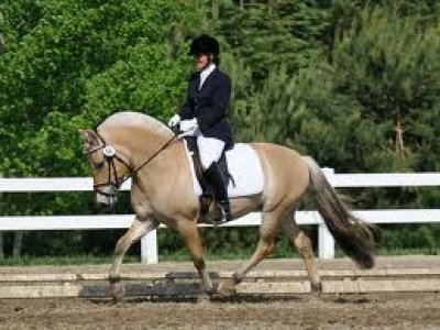 An Introduction to Horse Riding