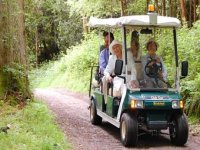 Take an electric buggy around.