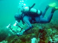 Experience diving for yourself