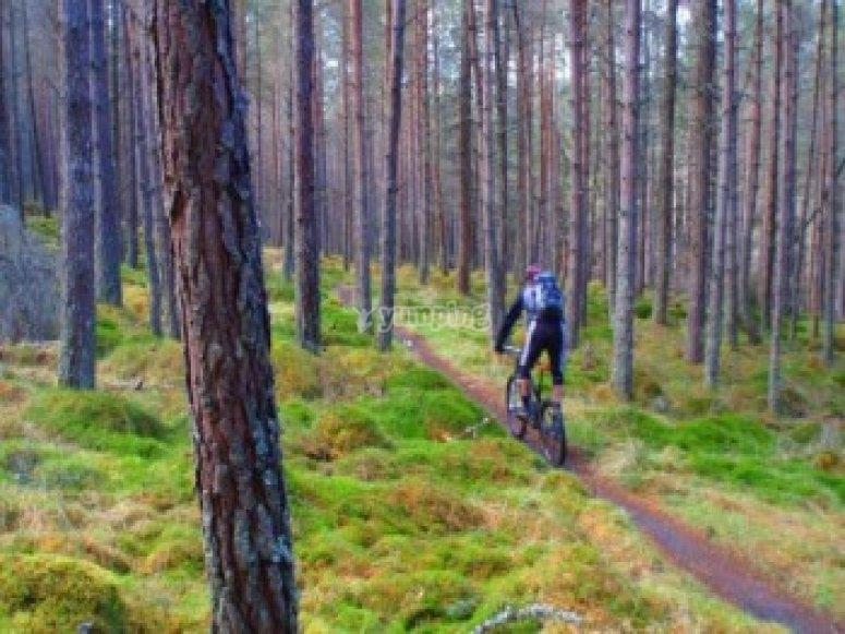 Forest Mountain biking Scotland
