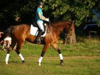 Technical Horse Riding