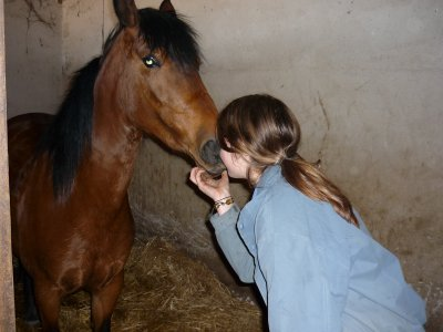 Voucher of 4 Horse Riding Classes in Salamanca