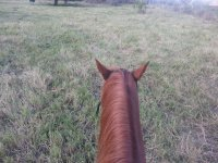 The best view in Cliff Hollins Riding School