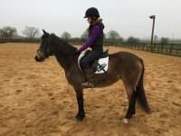We also sell beautiful horses at Hinckley Equestrian Centre