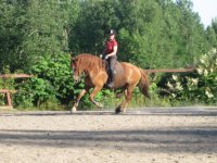 Dressage at Ditchling Common Stud