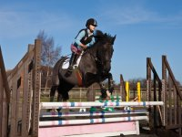 Showjumping at Ditchling Common Stud