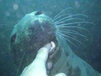 Make new friends at Farne Islands
