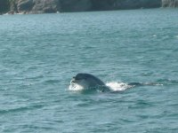 and enjoy the playful dolphins