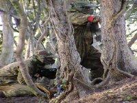 Tree dodgers