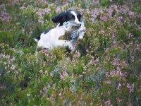 Grouse and dog hunter