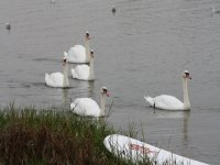 SUP in the beautiful setting of Christchurch Harbour