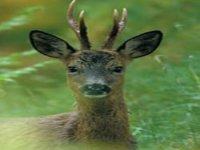Deer stalking in Fife, Scotland