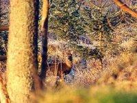 We hunt in winter
