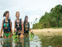 Diving courses from beginners up to and past instructor level
