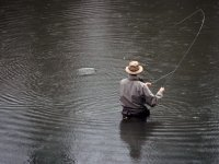 Fly fishing in the lake