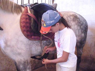 Package 4 1 hour horseback riding lessons, Huertas
