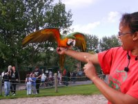 Blackpool Zoo Parrot