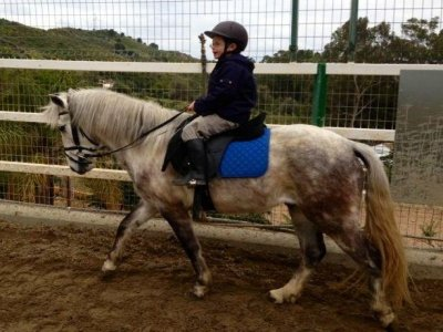 45 min group horseback riding lesson, Marbella