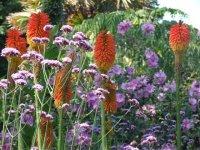 Subtropical Flowers