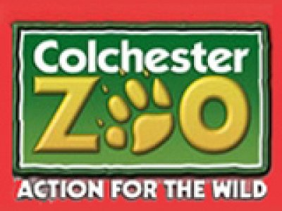 Colchester Zoo - Zoos