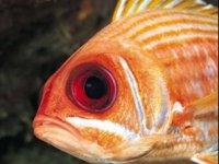 Venomous fish in the Oceans
