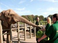 Walk by elephants