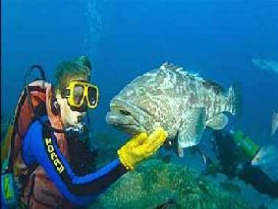 Aqua Adventure Training