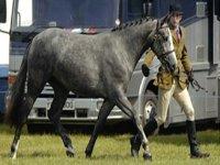 Equine Courses