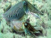 A wonderful sea creature
