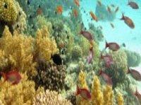 Ocean's nature beauty