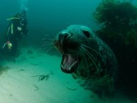You can see lots of wildlife when you go diving