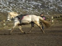 Our horse Silver